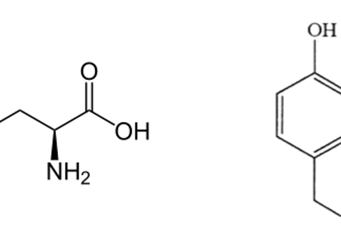 Structure of the amino acid tyrosine (left) and dityrosine bonds (right) (Fancy and Kodadek 1999).